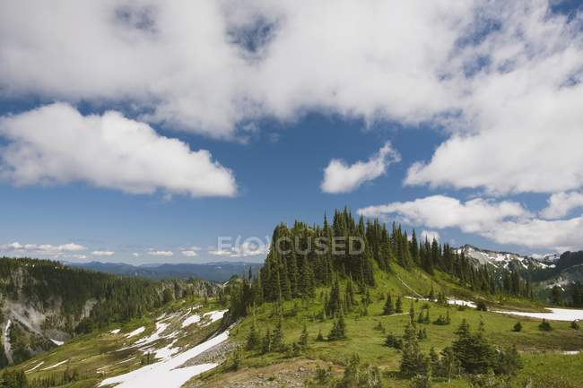 Forest and mountains Landscape — Stock Photo