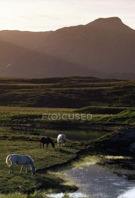 Лошади; Со Керри, Ирландия — стоковое фото