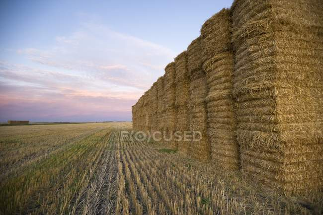 Hay Bales laying on field — Stock Photo