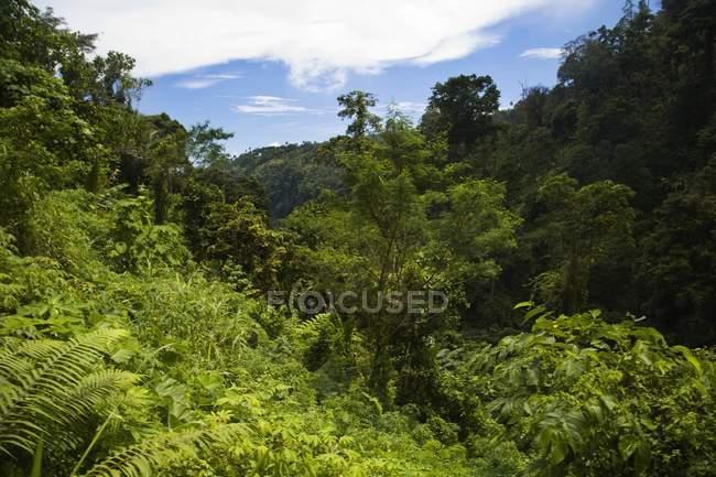 Vegetación exuberante contra el cielo nublado - foto de stock