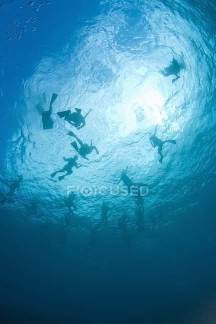 Живописный вид силуэтов аквалангистов, плавание под водой — стоковое фото