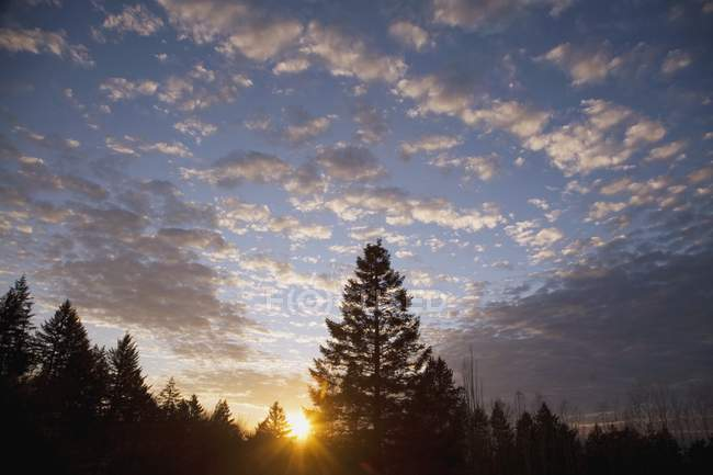 Sagoma della foresta al tramonto — Foto stock