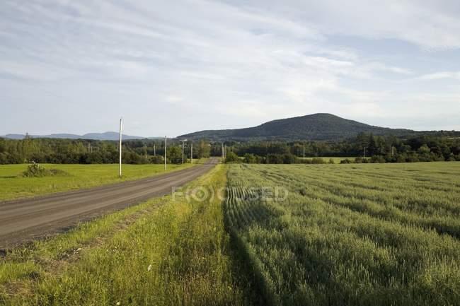 Проселочная дорога, окруженный травой — стоковое фото