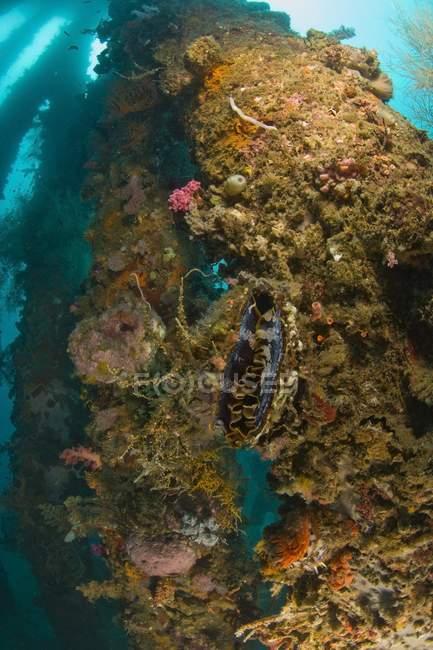 Vida marina en el muelle de Dumaguete - foto de stock
