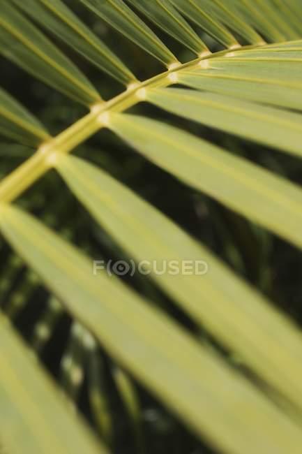 Closeup de un rama verde - foto de stock