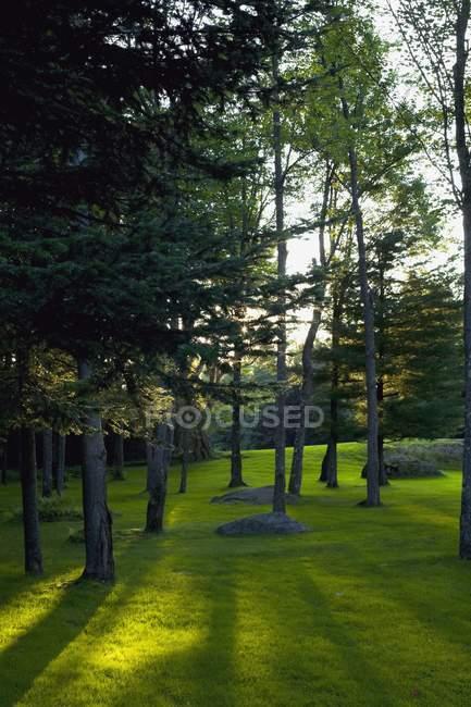 Gramado de grama verde — Fotografia de Stock
