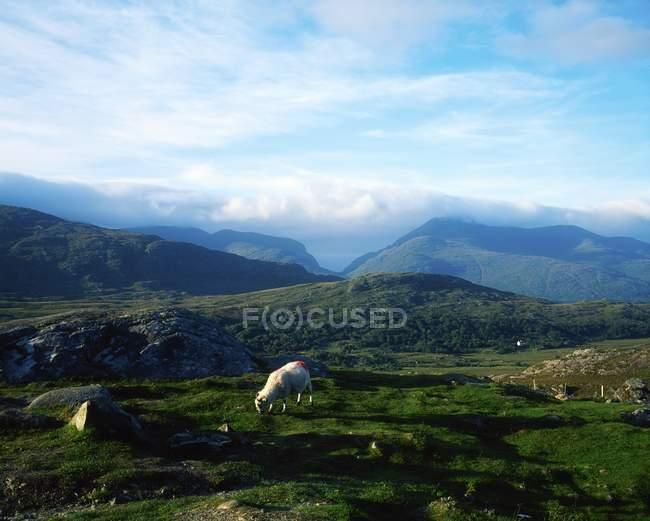 Molls Gap, Gap Of Dunloe — Stockfoto