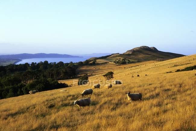 Bray Head, County Wicklow, Irlanda — Fotografia de Stock