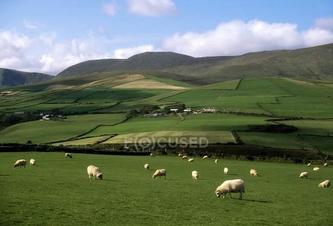 Dingle Peninsula, County Kerry, Irlanda — Fotografia de Stock