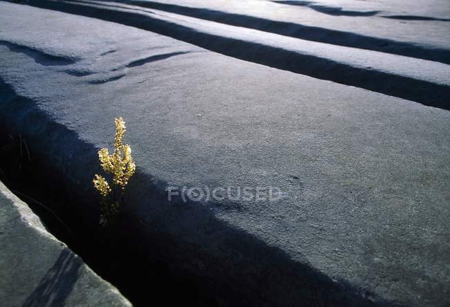Calcare digna su terreno roccioso — Foto stock