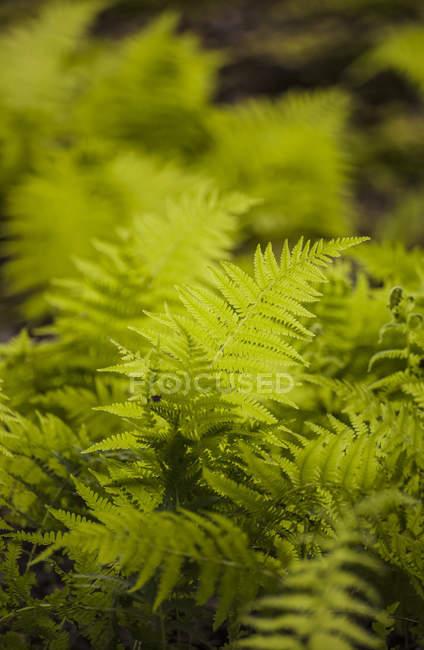 Planta de helecho y hojas verdes sobre fondo borroso - foto de stock