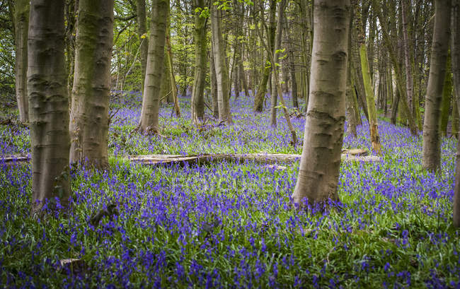 View of trees at forest and purple flowers on ground among green view of trees at forest and purple flowers on ground among green grass during daytime mightylinksfo