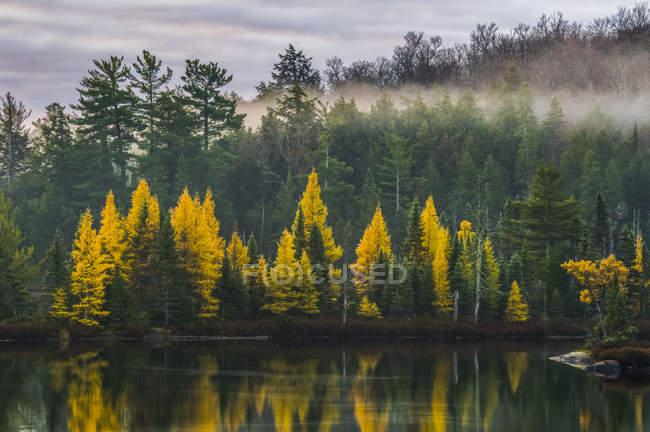 З видом на ліс та води роздуми дерев денний час — стокове фото