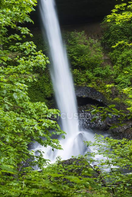 North Falls se sumerge en el cañón en Silver Falls State Park; Oregon, Estados Unidos de América - foto de stock