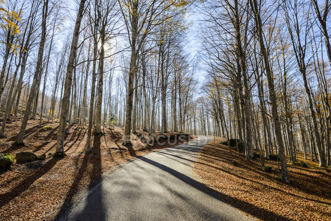 View of road with trees on sides during daytime — Stock Photo
