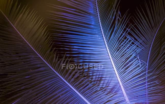 Крупный план пальмовых листьев против ясного голубого неба — стоковое фото