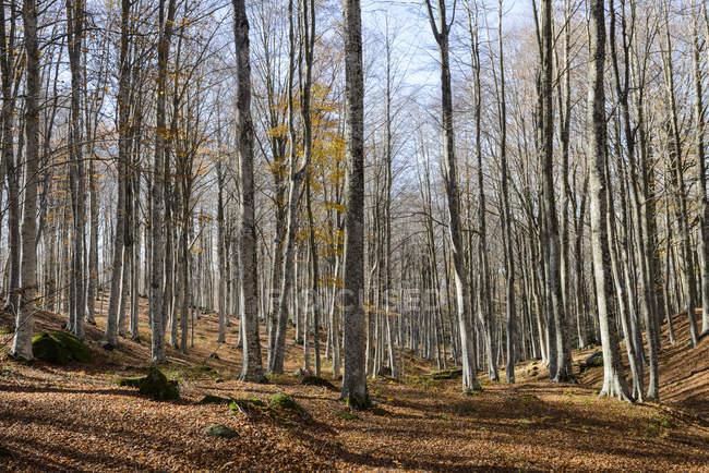 Vista da floresta com árvores crescendo sobre o solo durante o dia — Fotografia de Stock