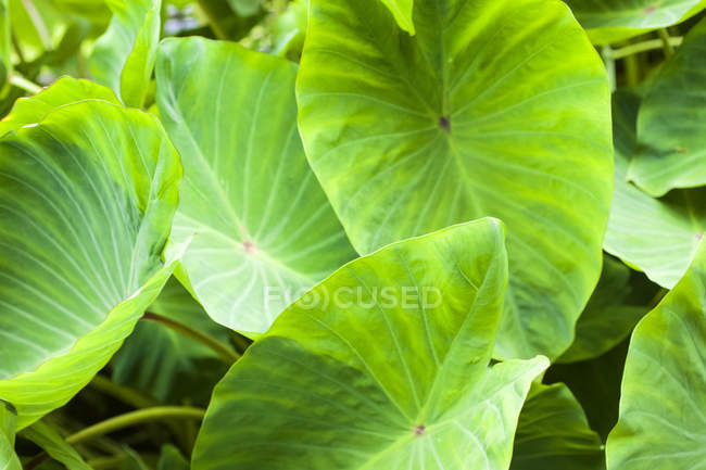 Big round green leaves growing over ground during daytime — Stock Photo