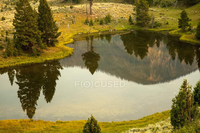 Evergreen Trees And Hills Reflected In A Small Pond In Yellowstone National Park In Summer (Smoke In The Air Contributes To Golden Color); Wyoming, United States Of America — Stock Photo