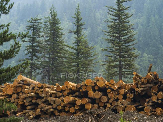 Madeiras de madeira empilhadas na floresta contra árvores e floresta exuberante no fundo — Fotografia de Stock