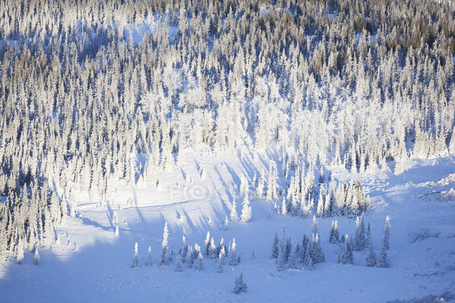 Winter Landscape Of Snow And Frost Covered Forest; Аляска, США — стоковое фото