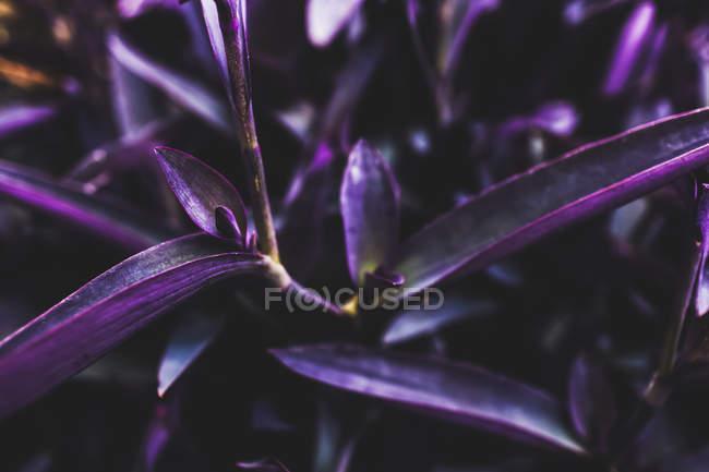 Залишає вигляд фіолетового заводу з розмитість фону — стокове фото