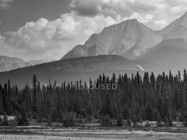 Балковая и белая картина деревьев на берегу и гор на заднем плане — стоковое фото