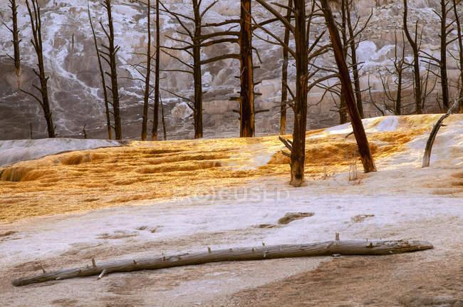 Згорів ліс від спеки на мамонтів Хот-Спрінгс, Єллоустоунський національний парк; Вайомінг, Сполучені Штати Америки — стокове фото