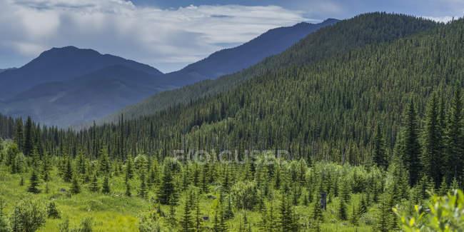 Grande foresta sul campo di erba verde con colline sullo sfondo — Foto stock