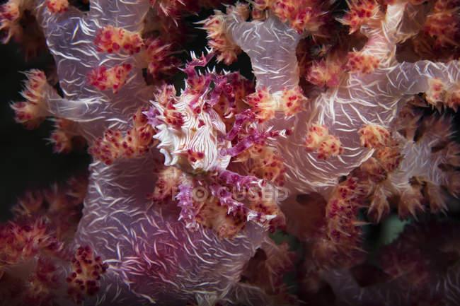 Вид на море рослини, що ростуть на риф під водою моря — стокове фото
