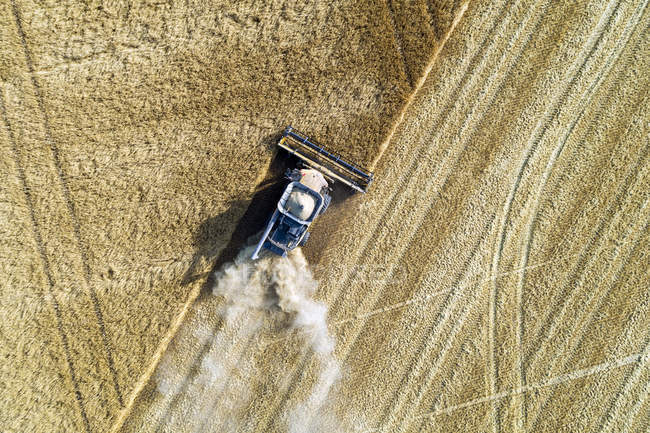 View from directly above of a combine cutting a barley field; Blackie, Alberta, Canada — Stock Photo