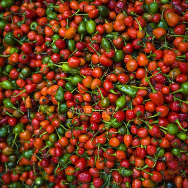 Обилие свежих Фефероны; Дарджилинг, Западная Бенгалия, Индия — стоковое фото