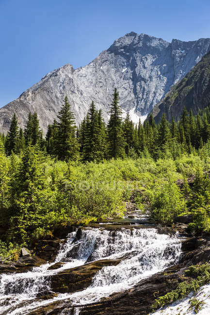 Creek Wasserfälle in Almwiese mit schroffen Bergen und blauem Himmel im Hintergrund; Kananaskis Country, Alberta, Kanada — Stockfoto