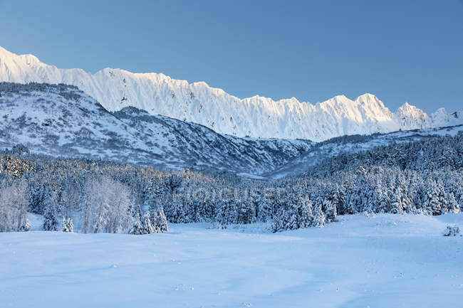 Spruce trees covered in fresh snow stand in front of a birch tree forest blanketed in snow warmed by the setting sun, rugged snow-covered ridge lines in the background, Turnagain Pass, Kenai Peninsula, South-central Alaska; Alaska — Stock Photo
