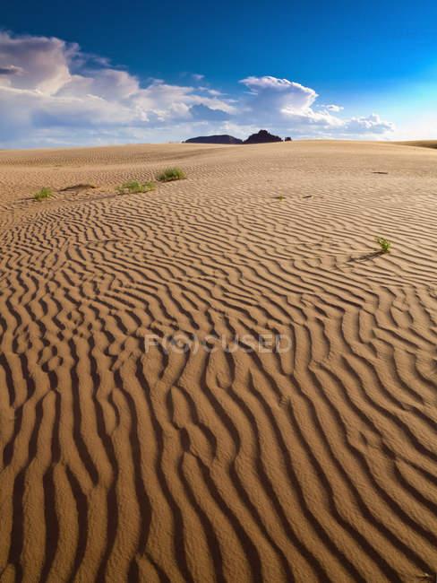 Increspature in una scena desertica estiva sabbiosa; Hanksville, Utah, Stati Uniti d'America — Foto stock
