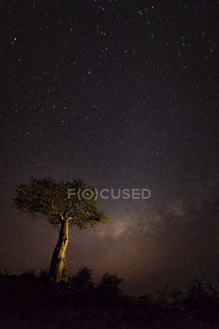Un cielo estrellado con luz que brilla en el horizonte y un árbol en primer plano; Etiopía - foto de stock