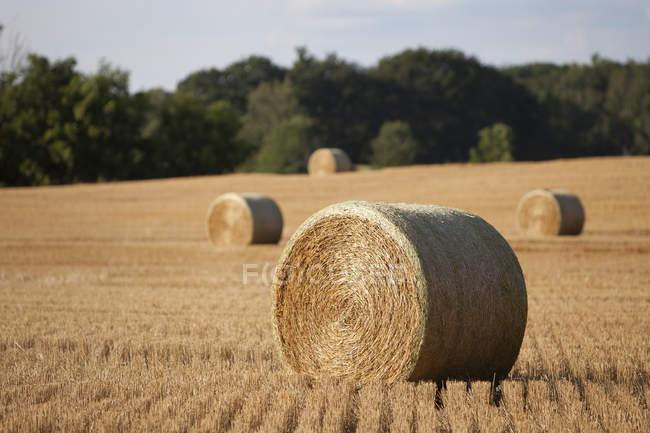 После засухи австралийские мусульмане пожертвовали 33 тонны сена фермерам