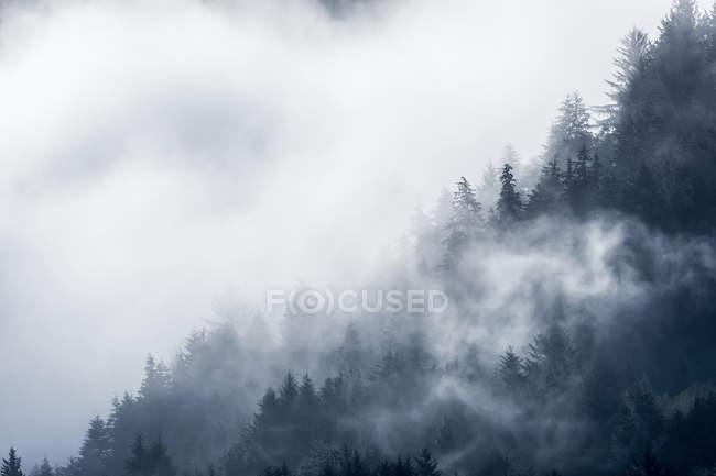 Wolken Hüllen den Wald auf einem Hügel in Siletz Bay National Wildlife Refuge; Lincoln City, Oregon, Vereinigte Staaten von Amerika — Stockfoto
