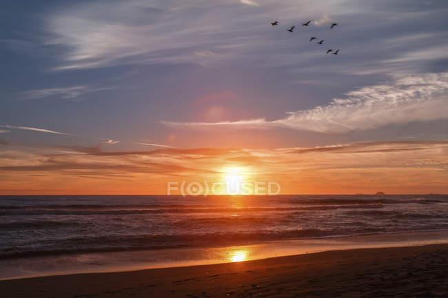 Les cormorans volent le long du rivage pendant le coucher du soleil ; Gold Beach, Oregon, États-Unis d'Amérique — Photo de stock