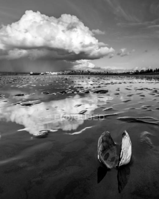 An open clam shell sits on the shore with cloud reflected on the wet sand; Vancouver, British Columbia, Canada — Stock Photo