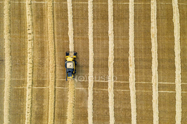 Aerial artistic view directly above a combine collecting lines of grain; Beiseker, Alberta, Canada — Stock Photo