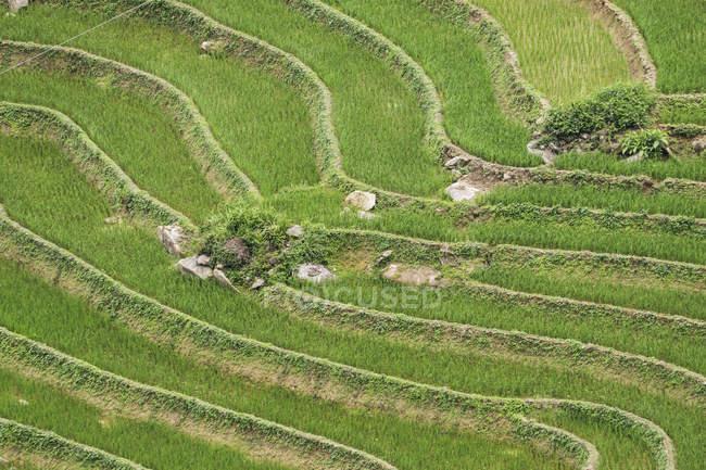 Rice terraces near Sapa; Lao Cai, Vietnam — Stock Photo