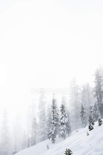 Un ripido pendio coperto nelle montagne di neve con neve che soffia e neve coperto gli alberi, Tahoe — Foto stock