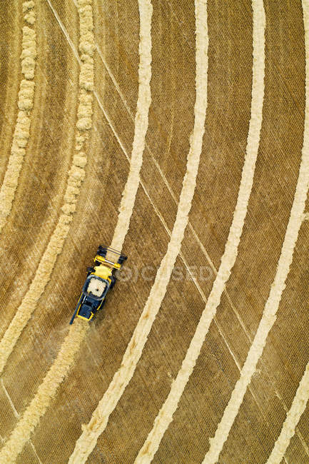 Aerial view directly above a combine collecting lines of grain; Beiseker, Alberta, Canada — Stock Photo