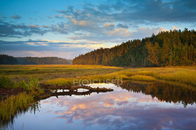 Sand River coastal salt marsh at sunset in autumn, Chignecto Bay, Raven Head Wilderness; Nova Scotia, Canada — Stock Photo