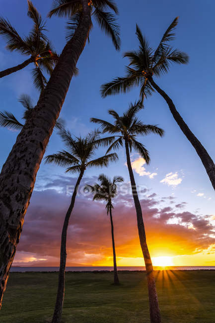 The sun sets behind silhouetted palm trees; Kihei, Maui, Hawaii, United States of America — Stock Photo