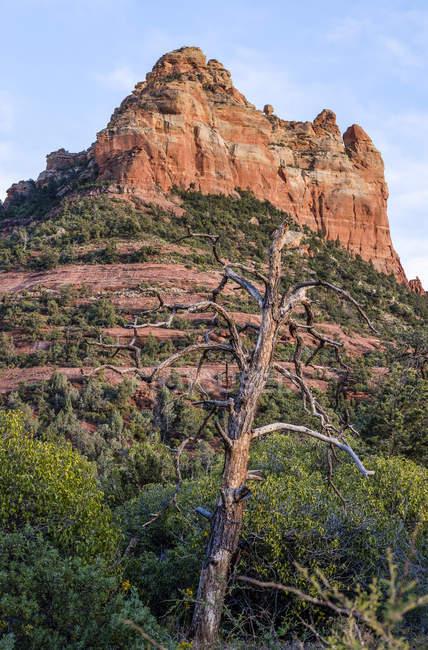 Formação rochosa de arenito com uma árvore sem folhas em primeiro plano; Sedona, Arizona, Estados Unidos da América — Fotografia de Stock