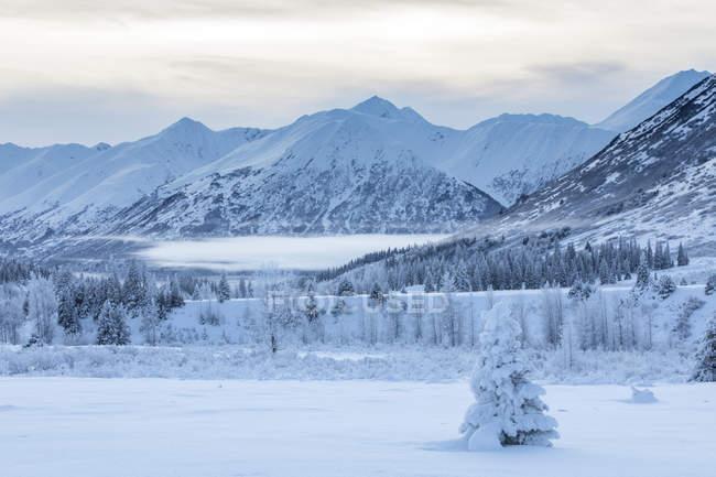 Un solo árbol abeto cubierto en rodales de nieve fresca en frente de una montaña cubierto de blanca nieve y nubes bajas, pase de Turnagain, Península de Kenai, Alaska meridional y central; Alaska, Estados Unidos de América - foto de stock