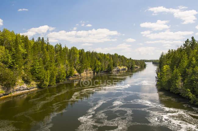 Un río tranquilo serpentea a través de un bosque de pinos en un hermoso día de verano; Campbellford, Ontario, Canadá - foto de stock