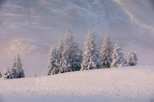 Spruce trees covered in fresh snow with fog and low cloud obscuring the birch tree forest blanketed in snow in the background, the mountainsides of Turnagain Pass bathed in warm light, Kenai Peninsula, South-central Alaska; Alaska — Stock Photo